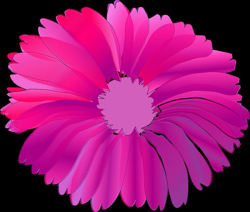 Free vector graphic: Flower, Pink, Huge, Summer.
