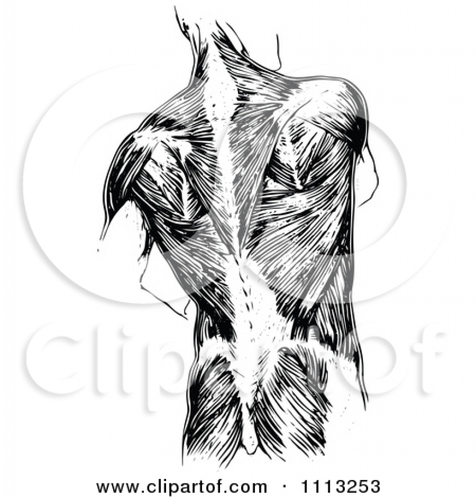 human anatomy clipart free human anatomy clipart free royalty free.