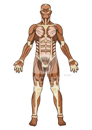 Human Anatomy Clipart Free.