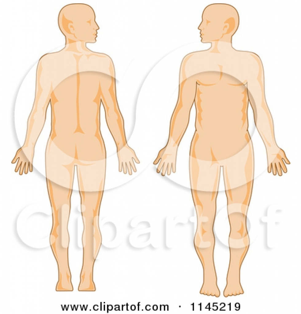 human anatomy clipart free human anatomy clipart free clipart of a.