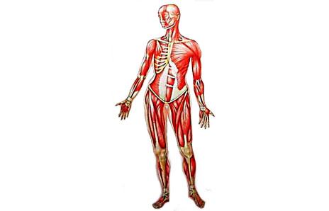 Human Body.