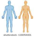 Human Body Outline Vector.