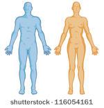 Human Body Outline Vector.