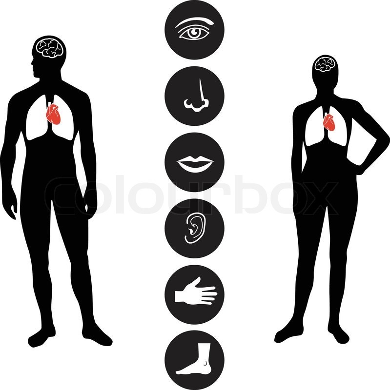 Human male and female body outline with icons of various human.