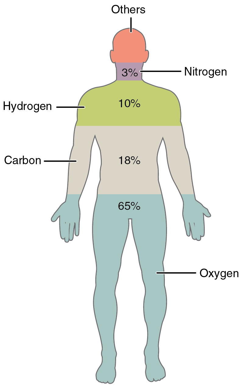 File:201 Elements of the Human Body.