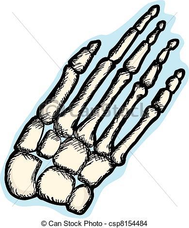 Human hand bones Vector Clipart EPS Images. 1,964 Human hand bones.