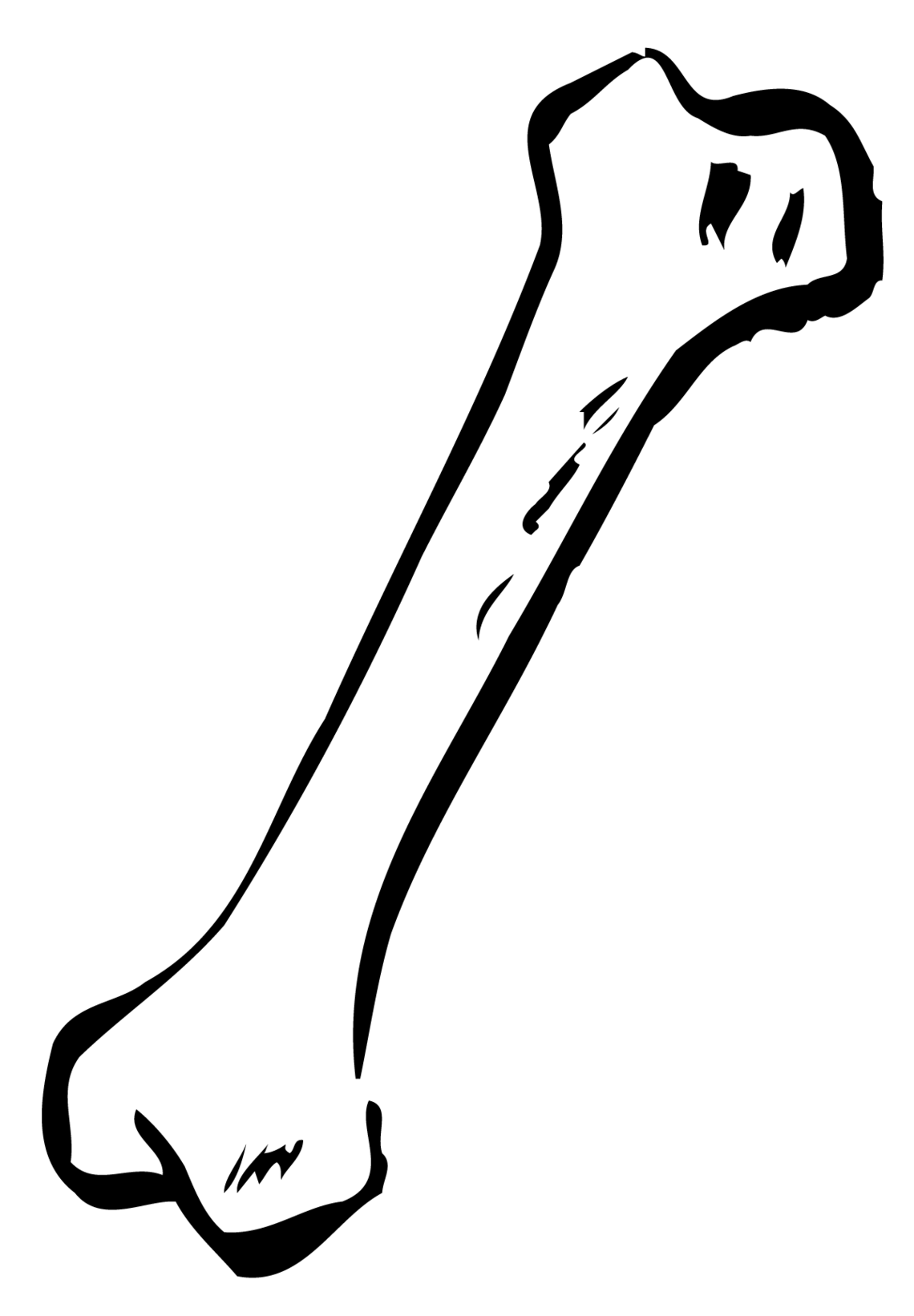 Bone Marrow Clipart.
