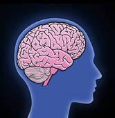 Human brain Illustrations and Stock Art. 15,053 human brain.