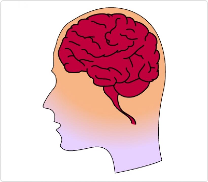 Human brain clipart black and white