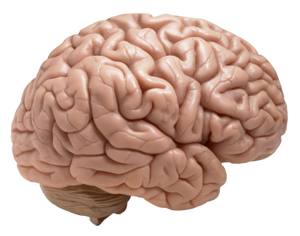 Human Brain Clipart Clip art of Brain Clipart #742 — Clipartwork.