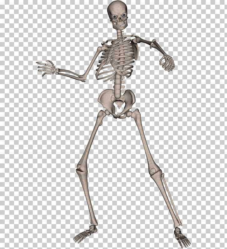 Human skeleton Computer file, Skeleton PNG clipart.