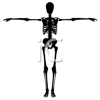 Skeleton of a Human.