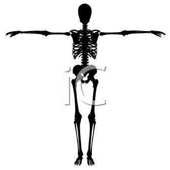 Skeleton of a Human.