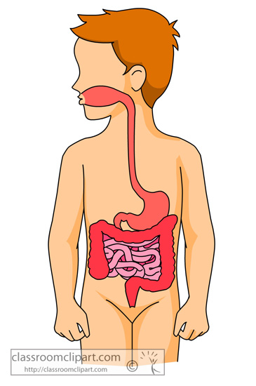 Human Digestive System Clip Art.