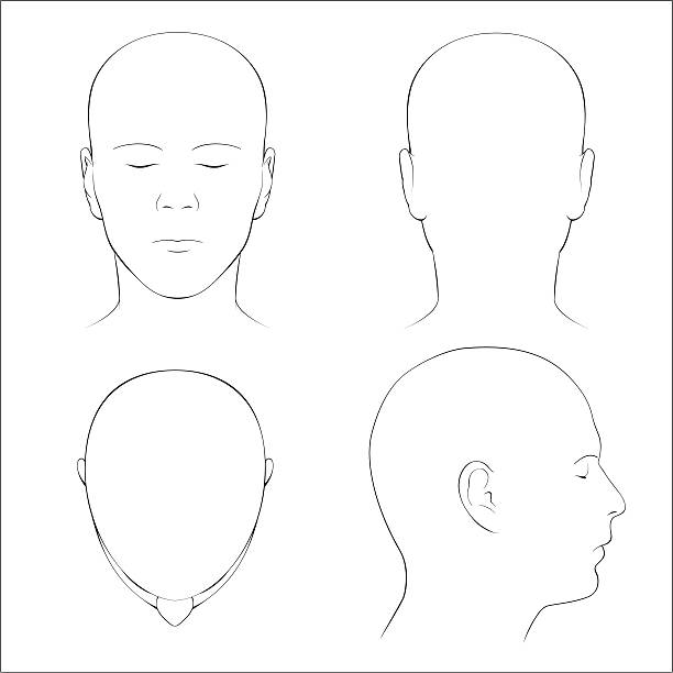 Best Human Head Illustrations, Royalty.