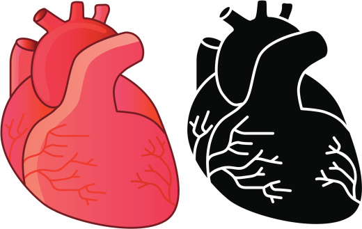 Human heart clipart 20 free Cliparts   Download images on ...