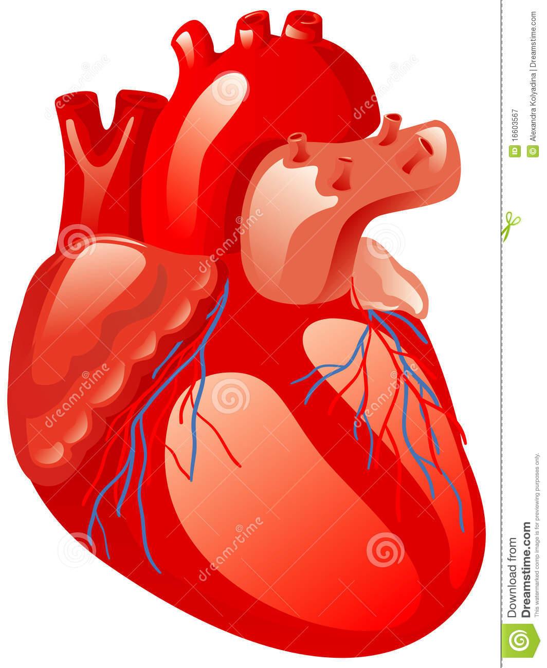 human heart clipart 20 free cliparts