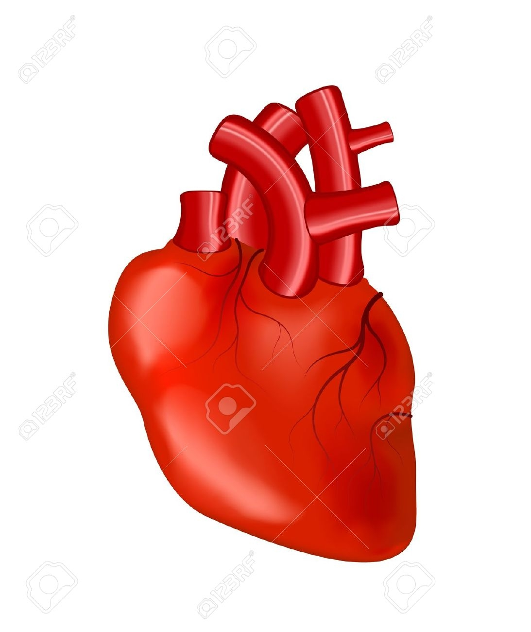 Real Human Heart Clipart.