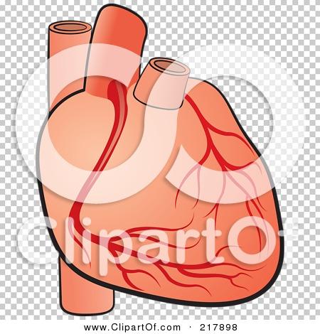 human heart clipart png