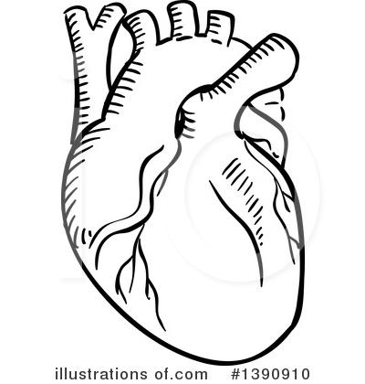 Human Heart Clipart #1390910.