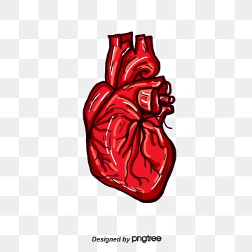 Human Heart PNG Images.