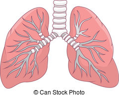 Clip Art. Lungs Clipart. Stonetire Free Clip Art Images.