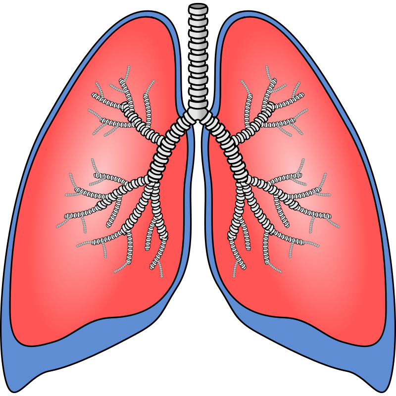 Human Lung Clipart Clipground