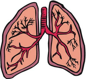 Lungs Clipart.