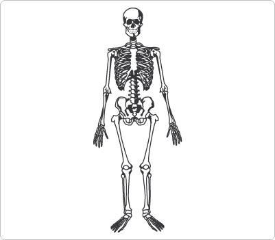 Human body clipart for kids bones.