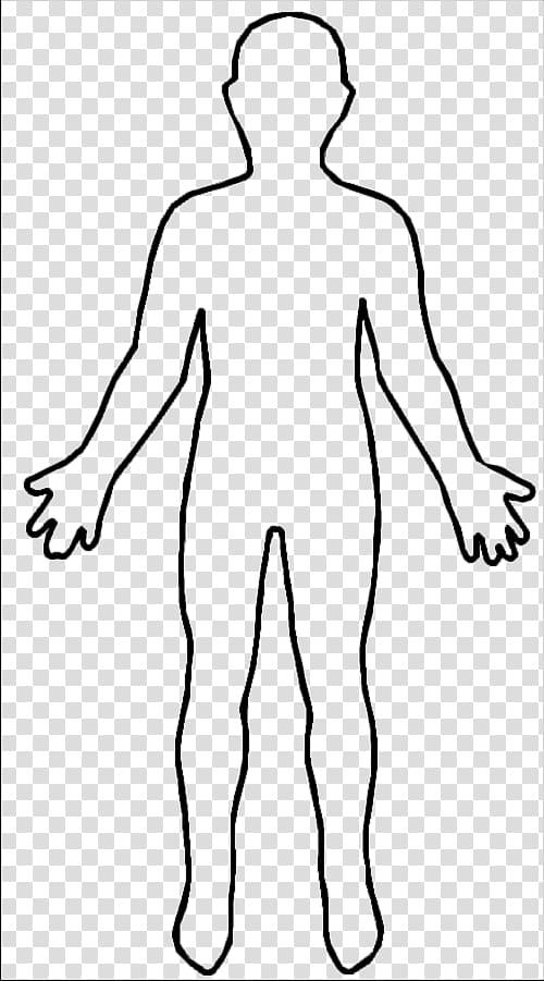 Human sketch, Human body Female body shape Homo sapiens.