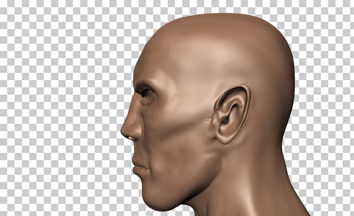 Human head Face Human body Skull, side view PNG clipart.