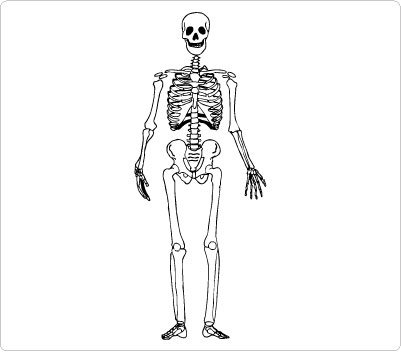 Human skeleton clipart.