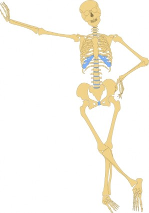Human skeleton clipart etc 2.