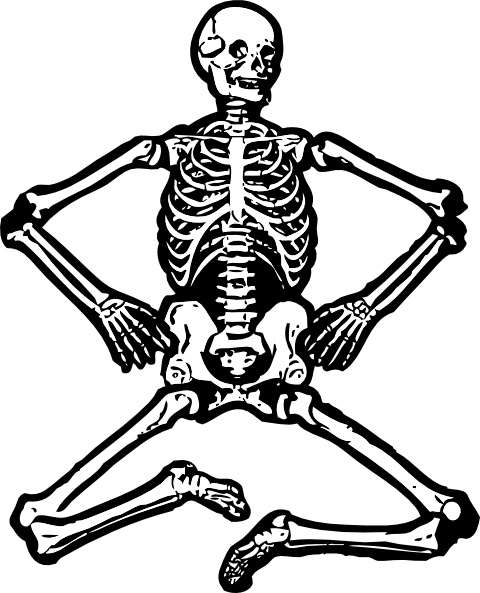 Human Skeleton clip art Free vector in Open office drawing svg.