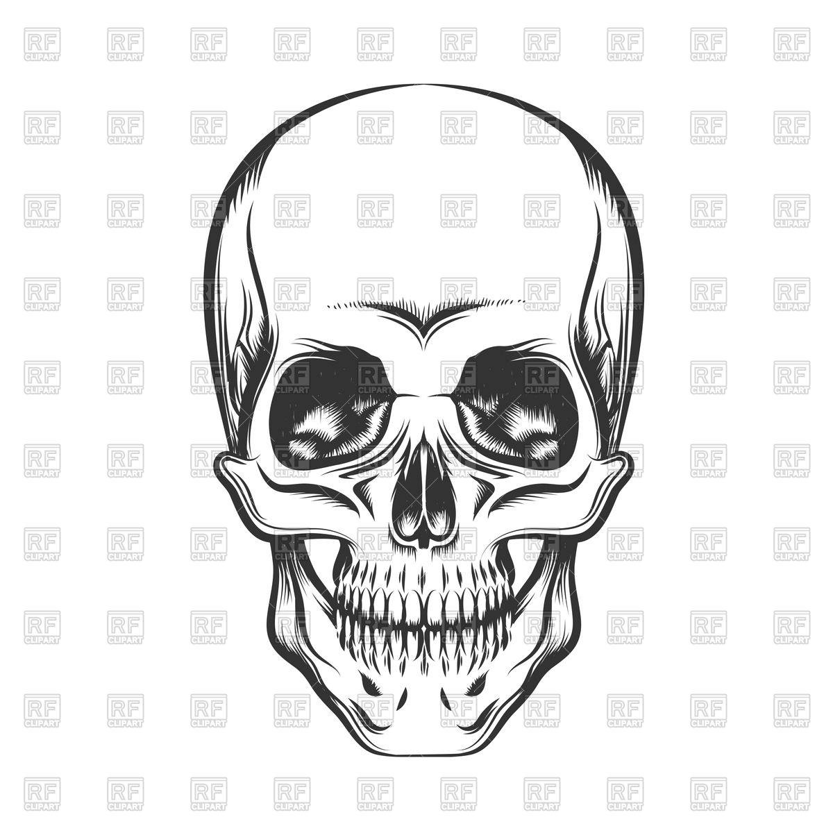 Black and white human skull Stock Vector Image.