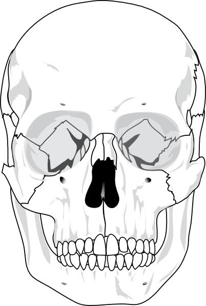 Human Skull clip art Free vector in Open office drawing svg ( .svg.