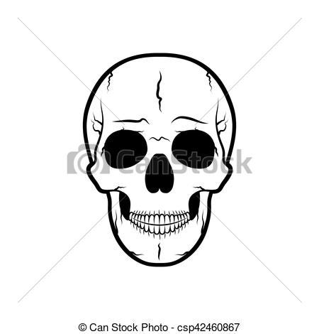 Human skull illustration..