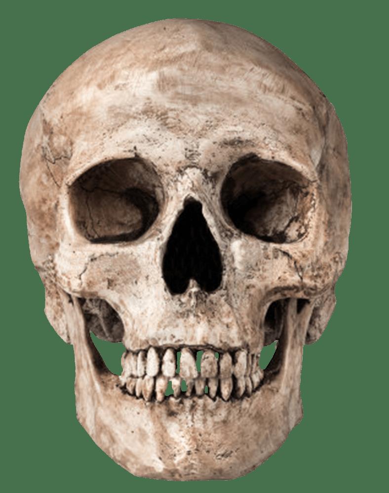 Human Skull transparent PNG.