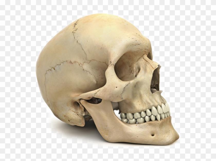Skeleton Png Free Download.