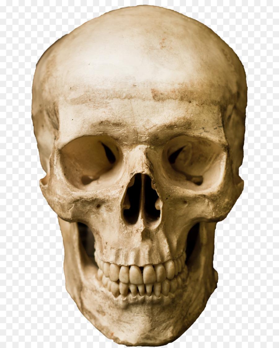 Skull Cartoon png download.