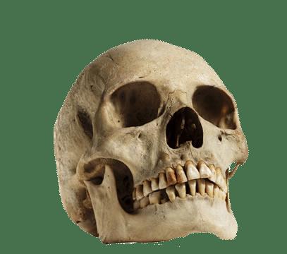 Human Skull Looking Up transparent PNG.
