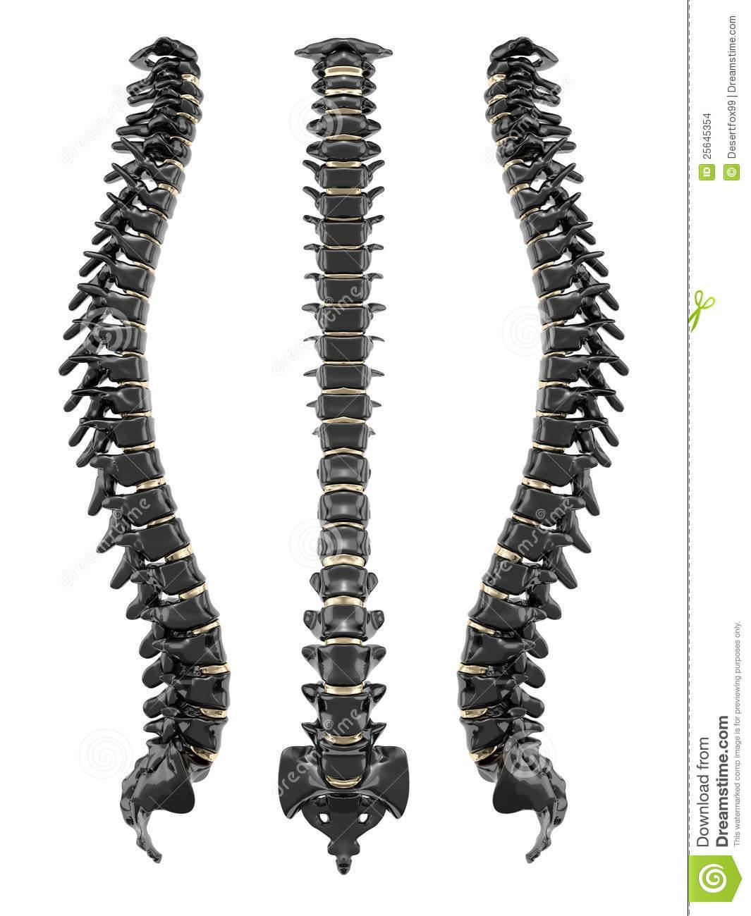 Back bone clipart.