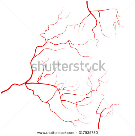 Human Veins Stock Images, Royalty.