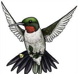 Free Hummingbird Clipart Pictures.