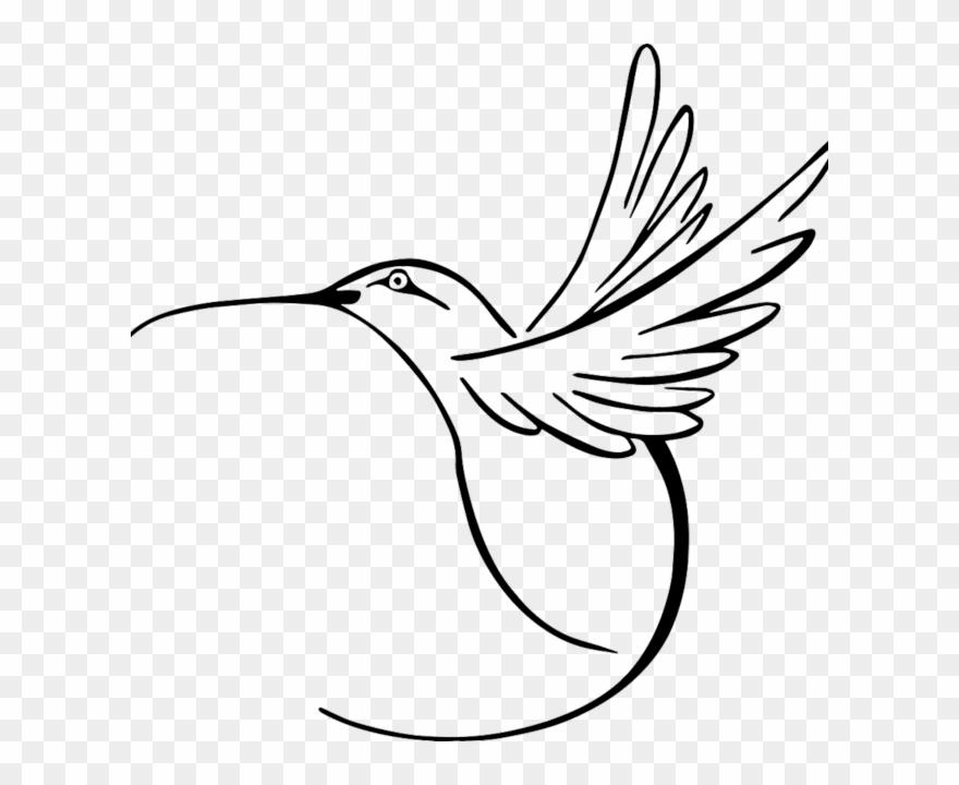 Hummingbird Vector Clipart (#1482606).