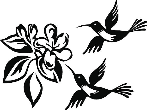 Best Black And White Hummingbird Illustrations, Royalty.