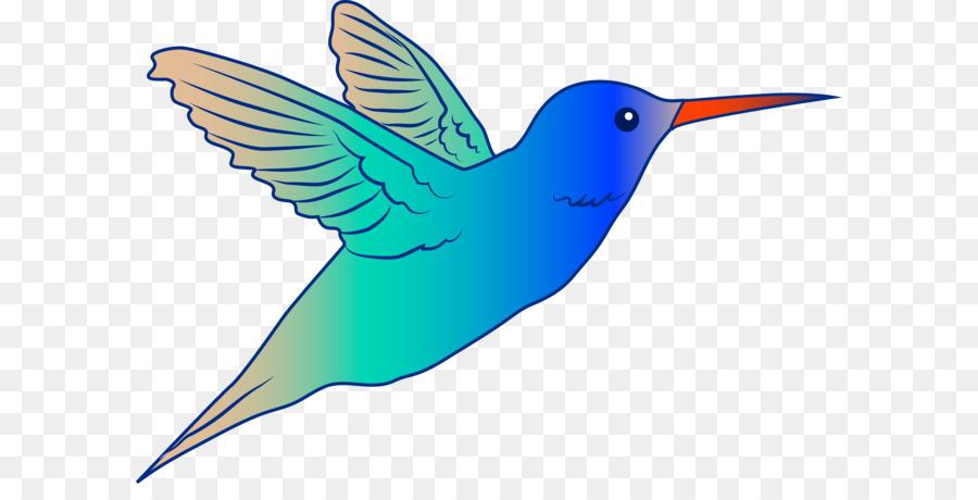 Hummingbird Drawing.