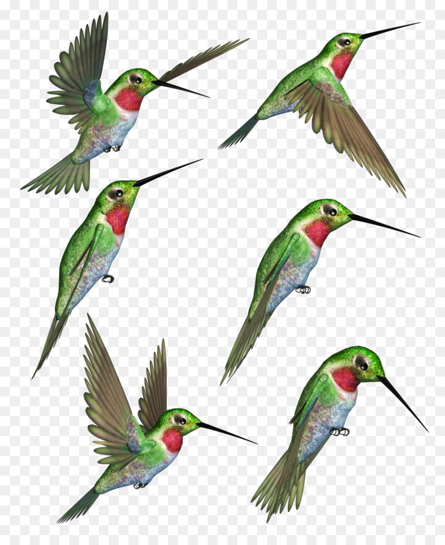 1261 Hummingbird free clipart.