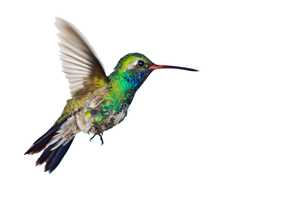 Download hummingbird clipart PNG Image for Free.