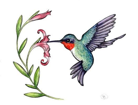 51 Hummingbird Clipart images ..